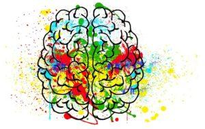 hjerne med farver
